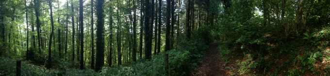 Exploring the Forest of Dean, close to St Briavels Castle