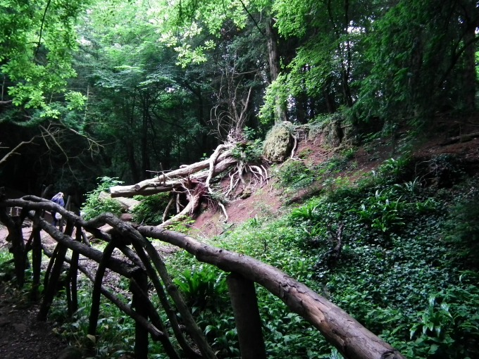 Exploring Puzzlewood, Forest of Dean