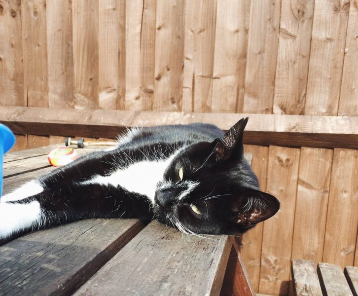 cat sleeping on a table in a garden