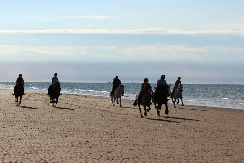 gallop down Holkham beach