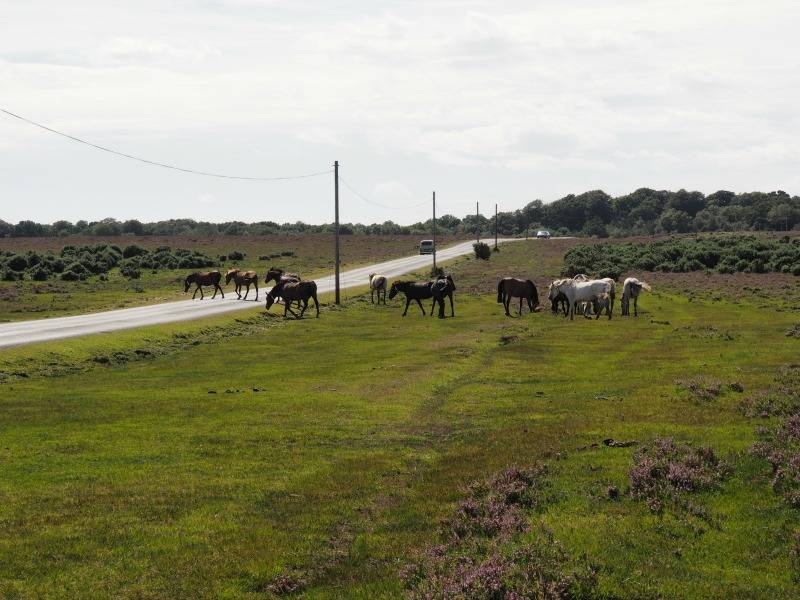 new forest crossing