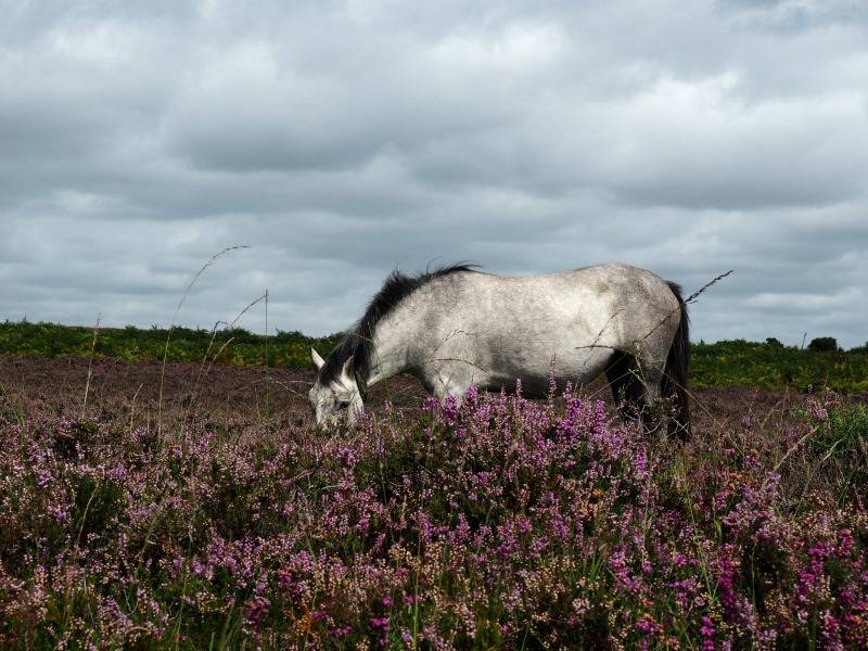 new forest grey