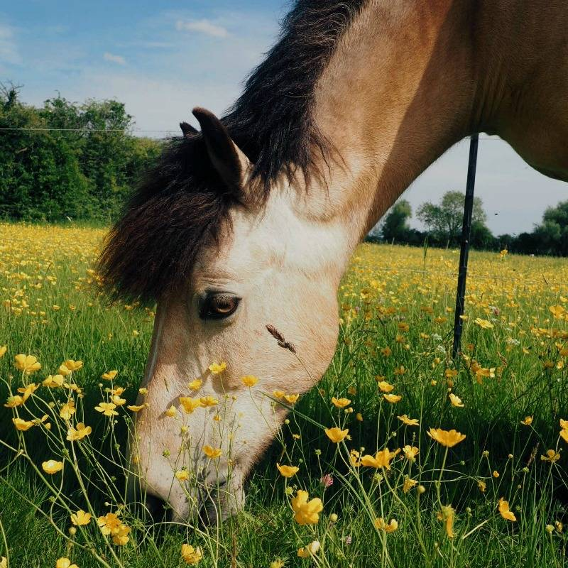 The Reality of Owning a Horse (sponsored)