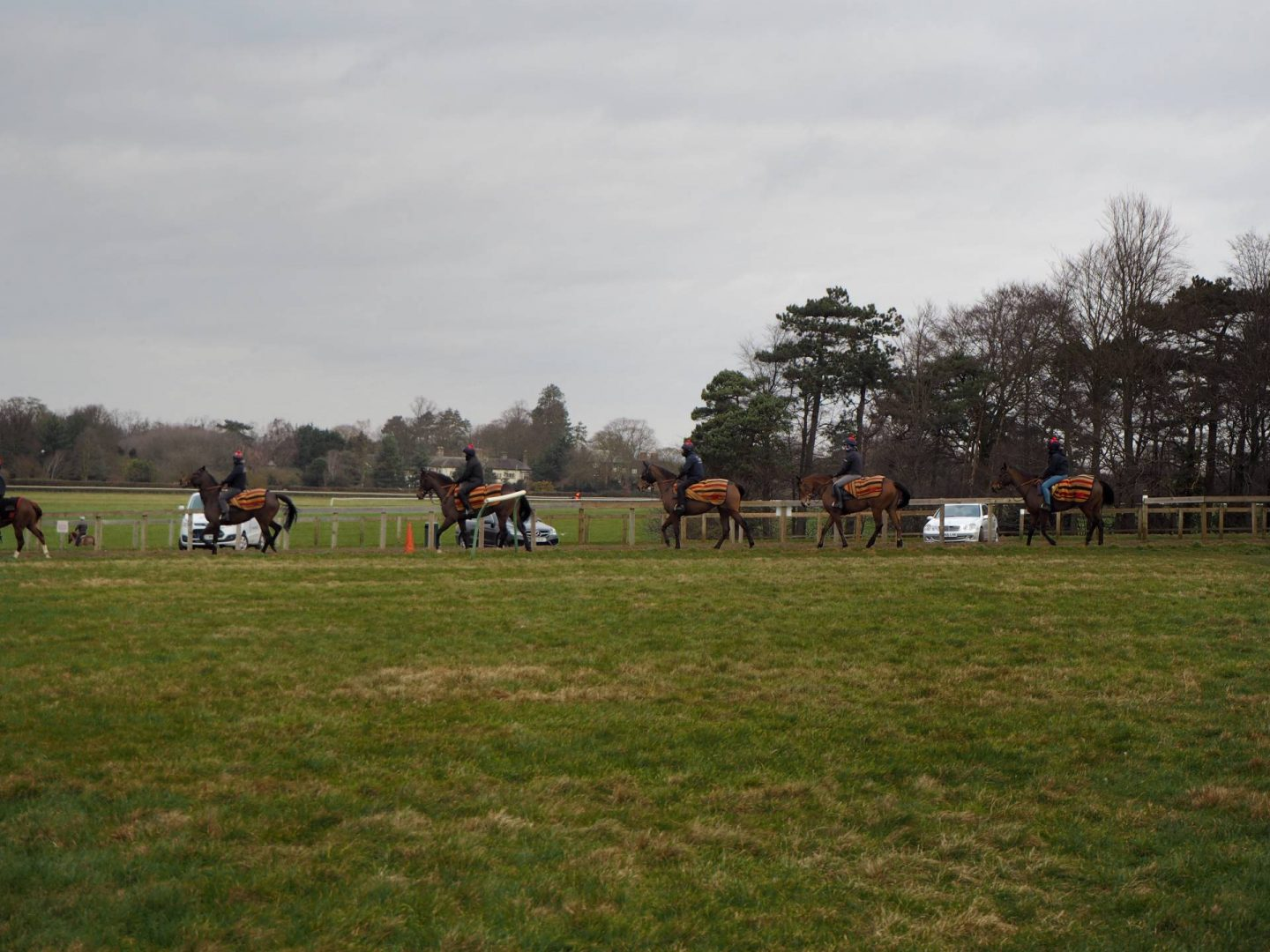 A line of horses training in newmarket
