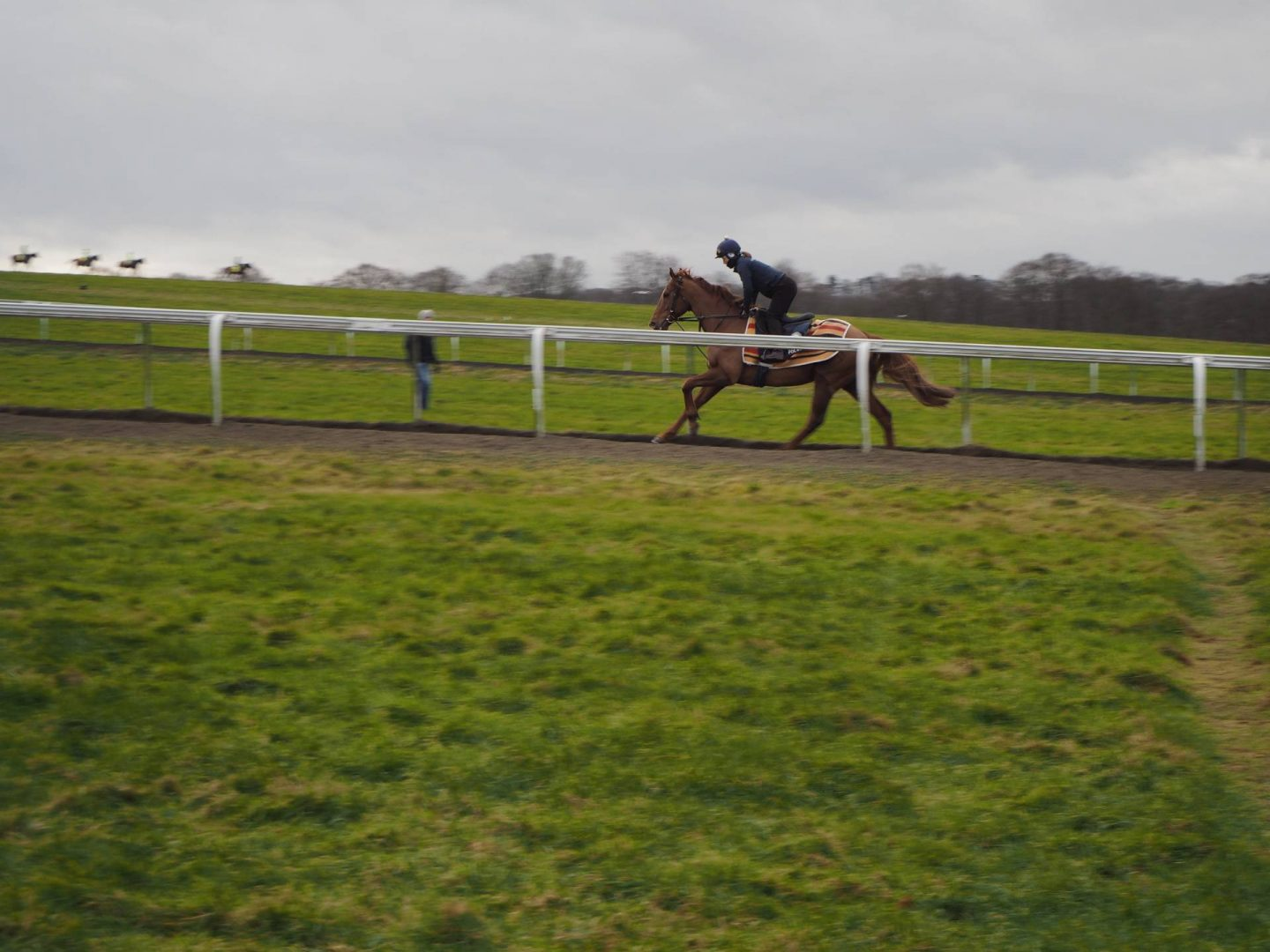 Horse cantering on gallop track in Newmarket