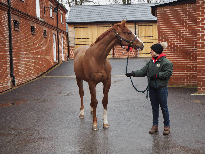Horse in Rothschild Yard Newmarket