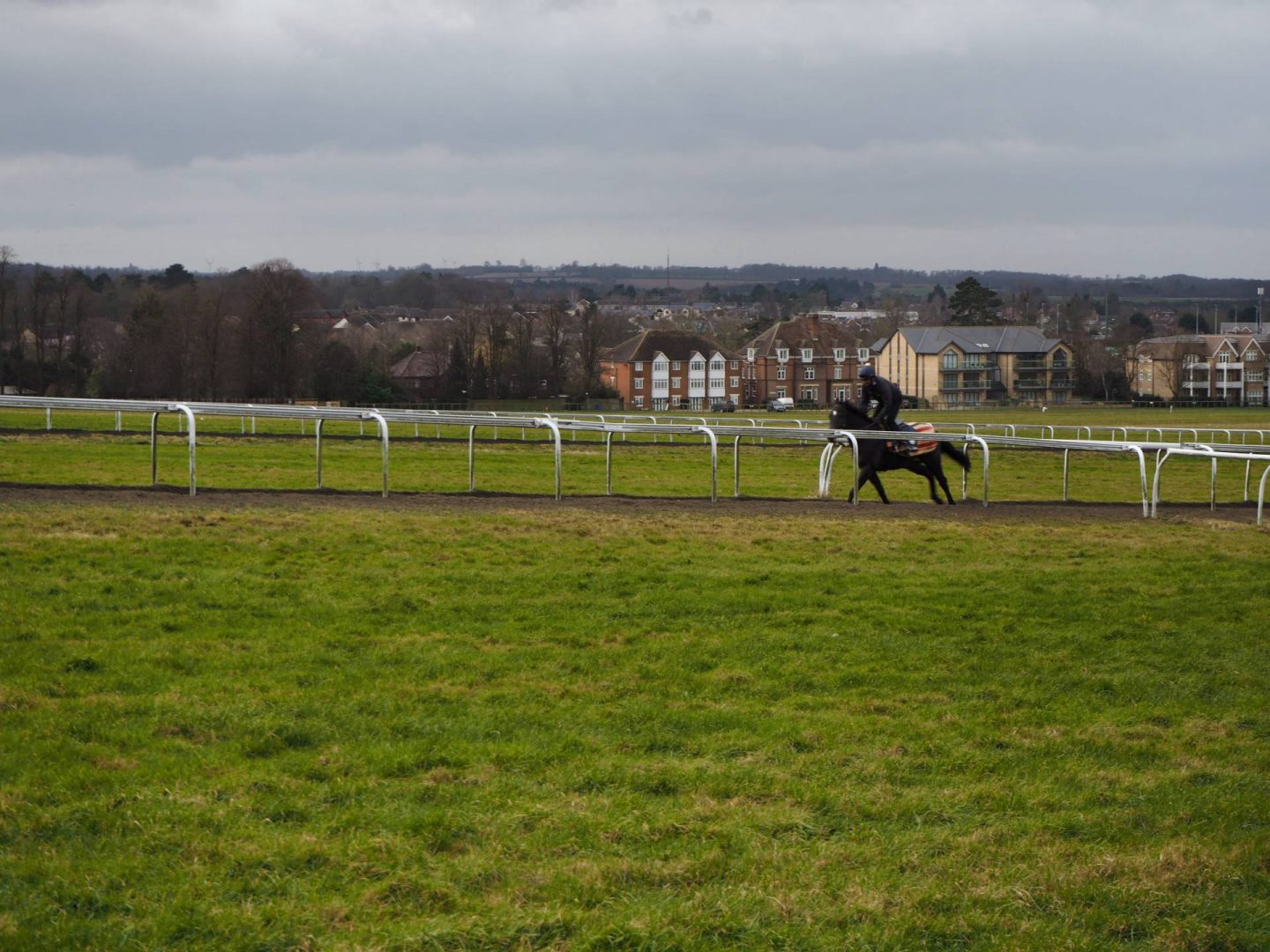 Horse on the Warren Hill gallop tracks in newmarket