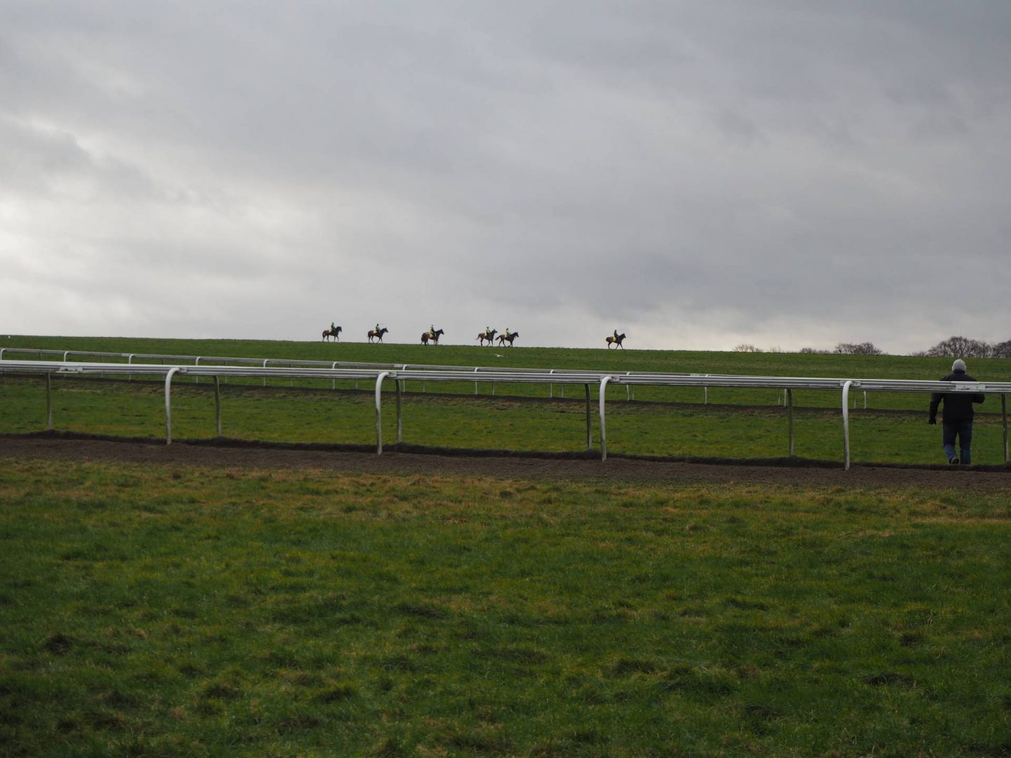 Horses on Gallop Tracks in Newmarket