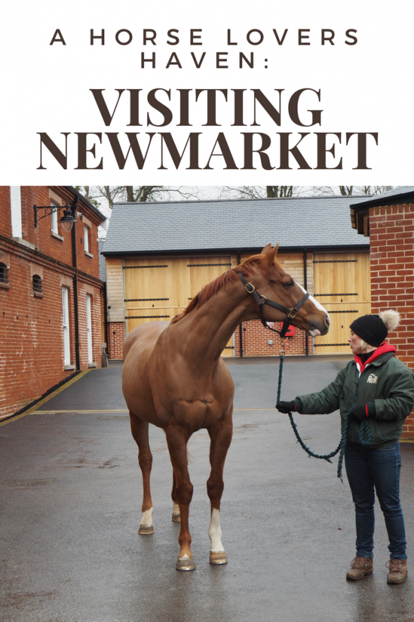 A simple guide for horse lover's who are looking to visit Newmarket