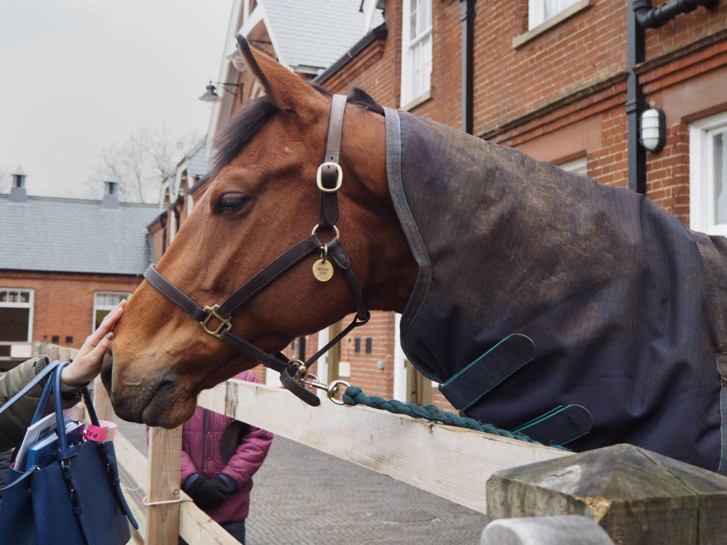 Retired racehorse at Rothschild Yard in Newmarket
