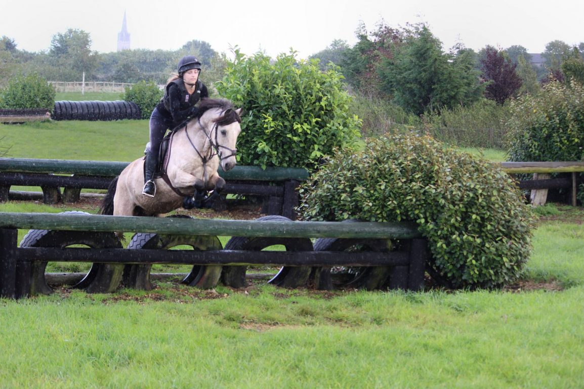horse on a cross country course