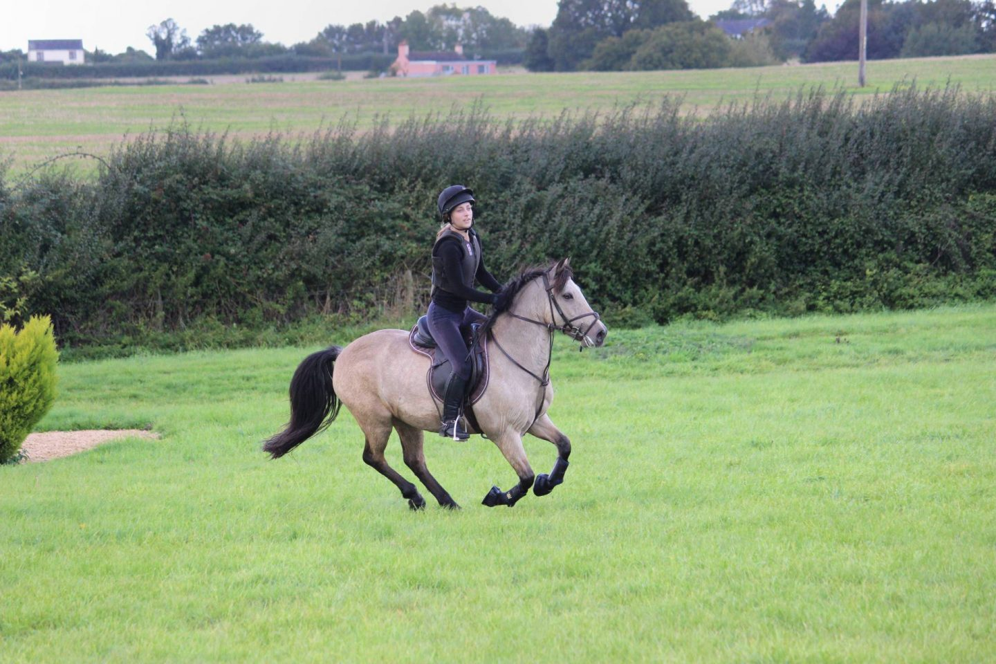 pony cantering on cross country course