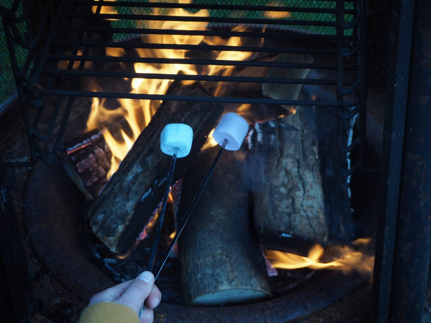 marshmallows toasting on wood fire
