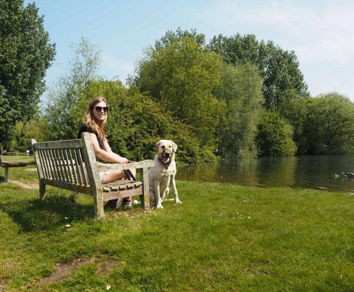 dog walking at emberton country park lakes