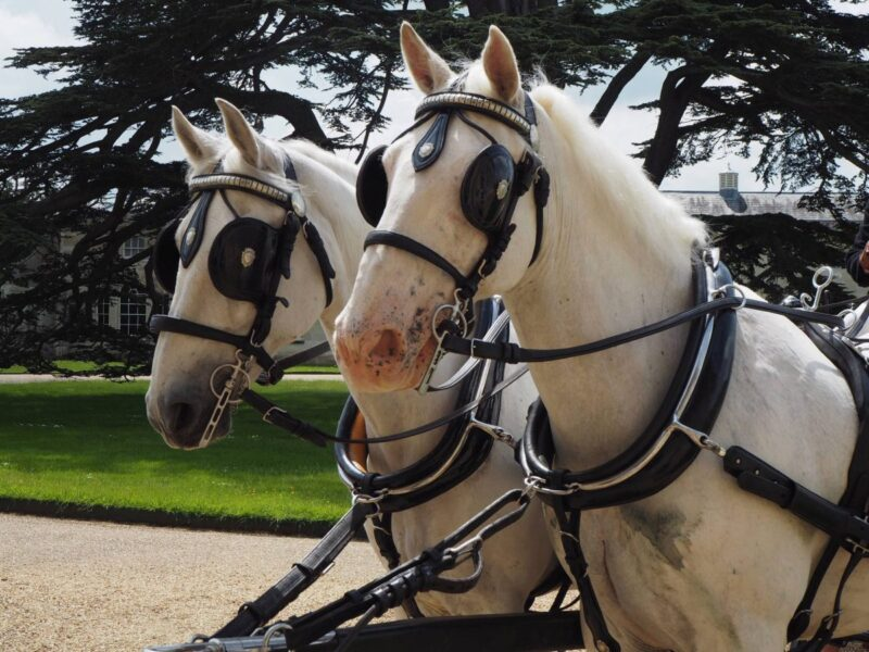 Horse and Carriage rides at Woburn Abbey