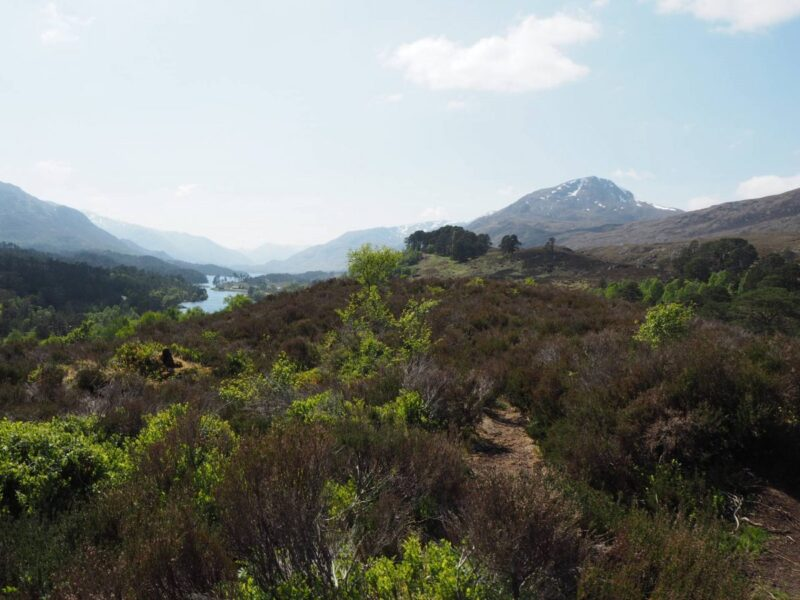 View at Glen Affric Viewpoint