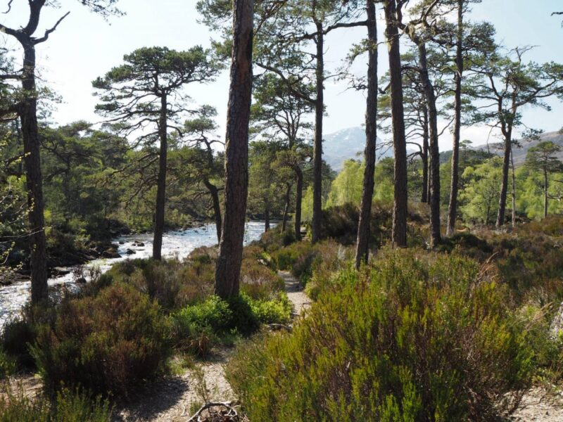 Walking along the River Affric in Scotland