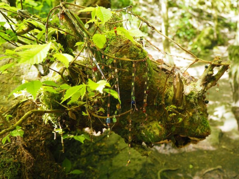 Charms hanging from a tree in the Rosemarkie Fairy Glen