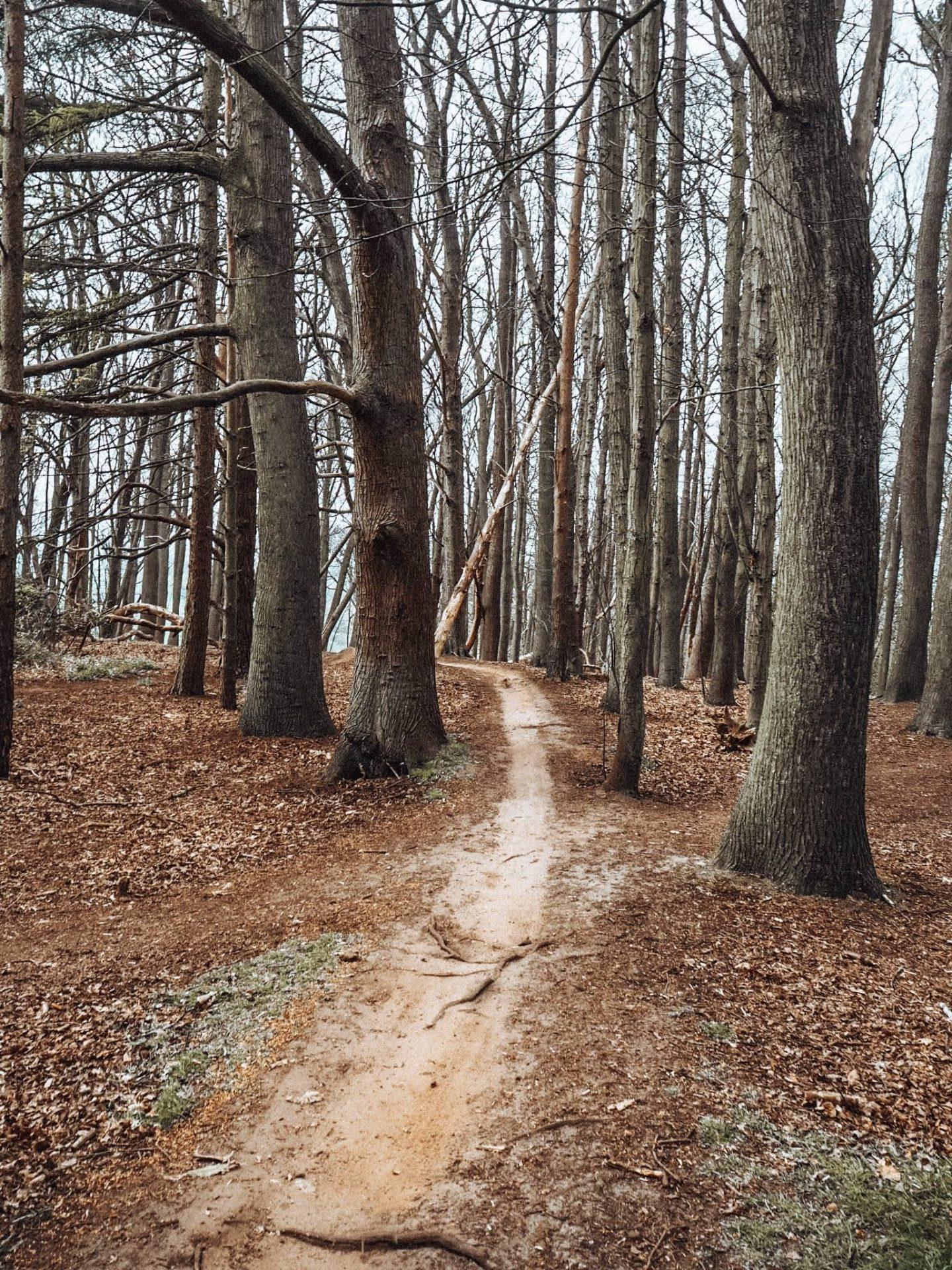A walk through Aspley Woods