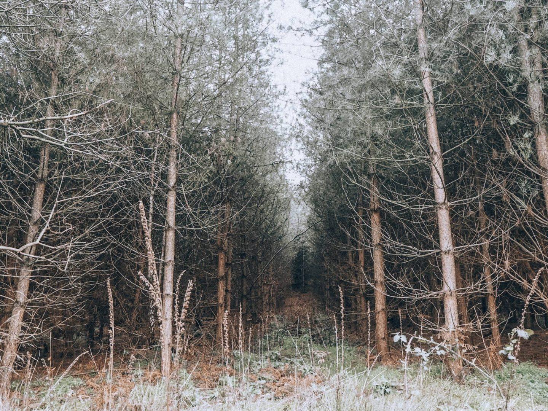A walk through Aspley Woods in Bedfordshire