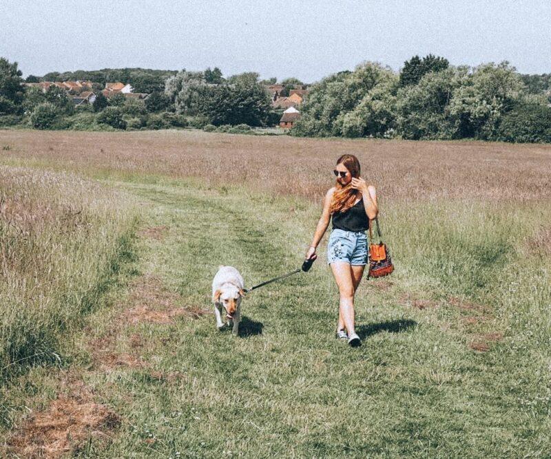 Girl walking a yellow labrador