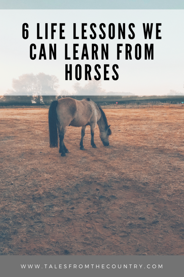 6 life lessons we can learn from horses