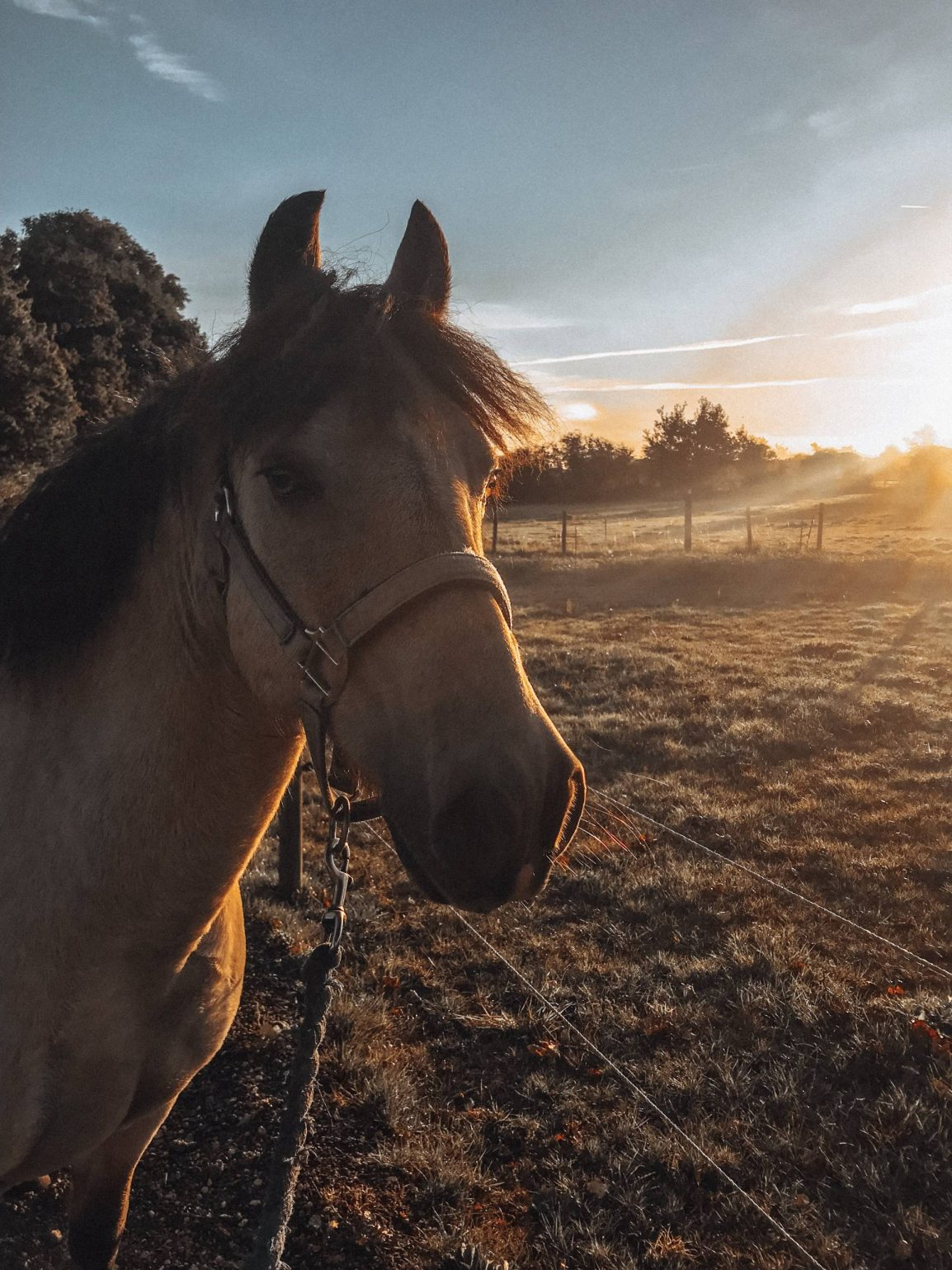 Horses can teach us many life lessons