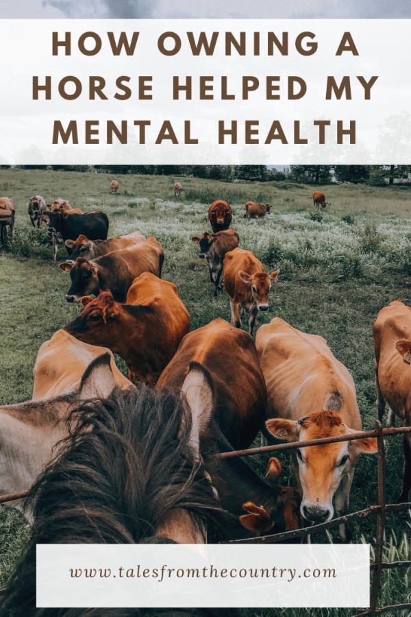 My horse helped my mental health