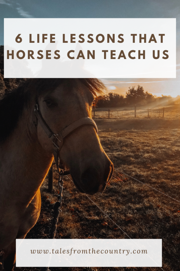 Having a horse has taught me an awful lot. Here are six of the most important life lessons that having a horse has taught me over the years
