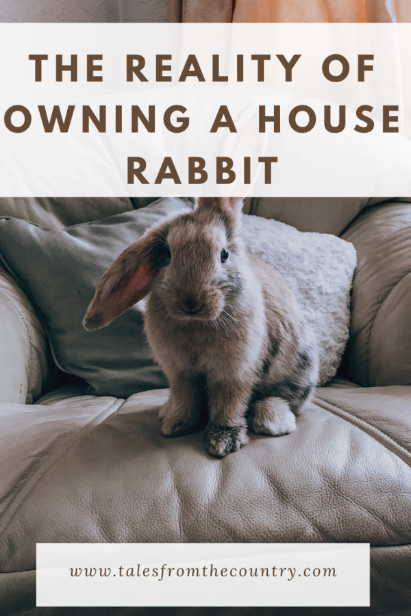 The reality of owning a house rabbit