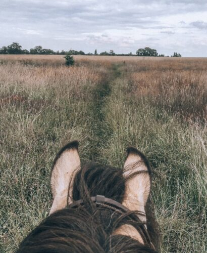View between horse's ears while hacking
