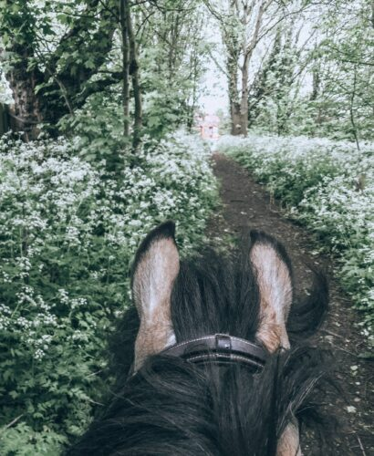 View from between horse's ears on a hack