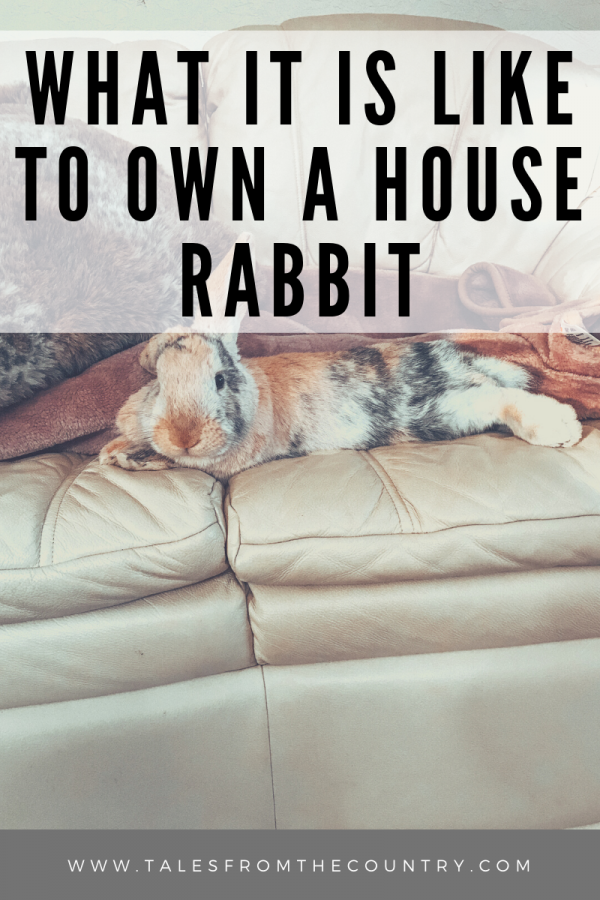 What it is like to own a house rabbit