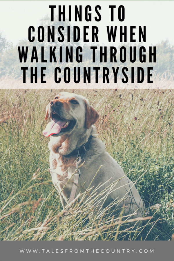 Things to consider when walking through the countryside