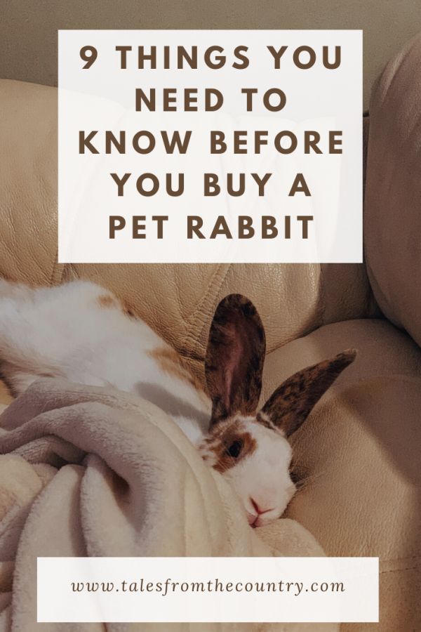 9 things you need to know before you buy a pet rabbit