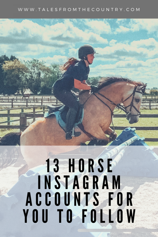 13 horse Instagram accounts for you to follow