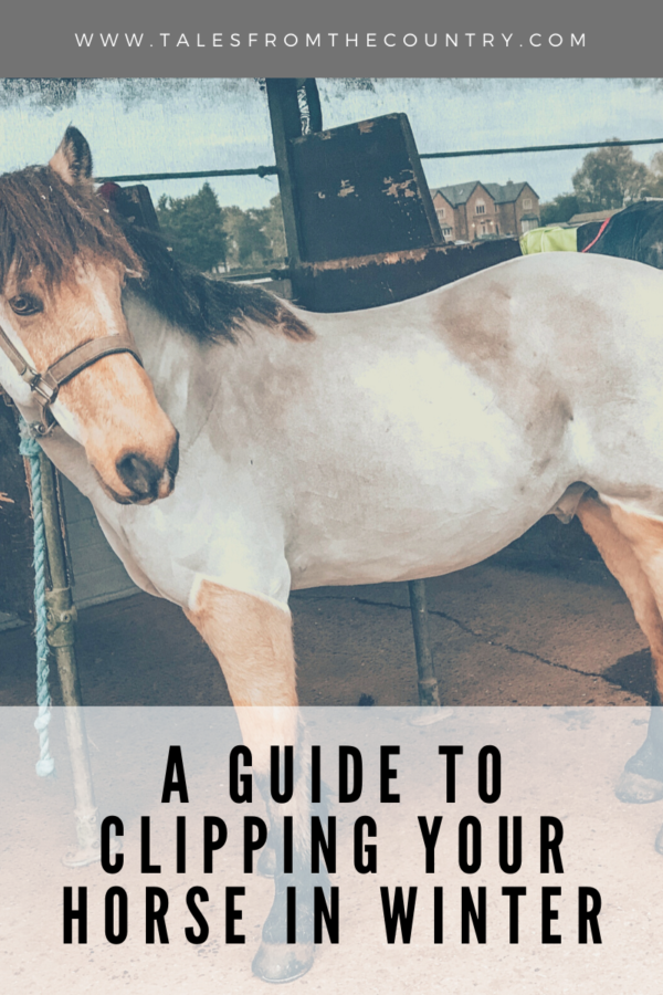 A guide to clipping your horse in winter