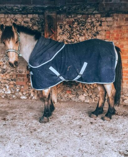 A horse wearing a rug during winter