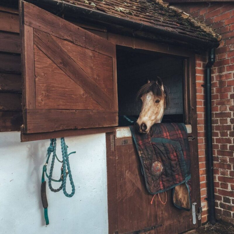 Horse looking over stable door in winter