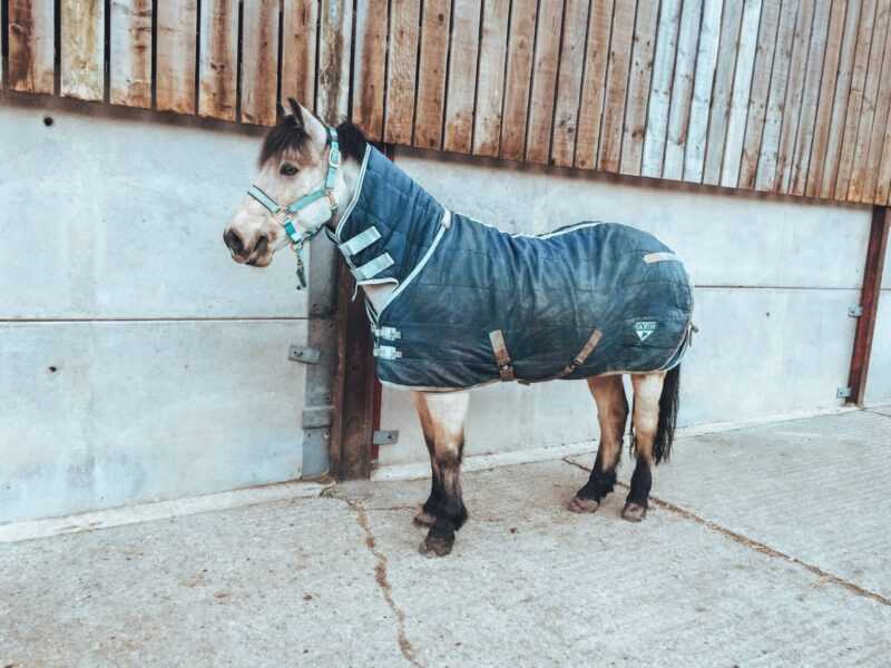Horse wearing rug after being clipped