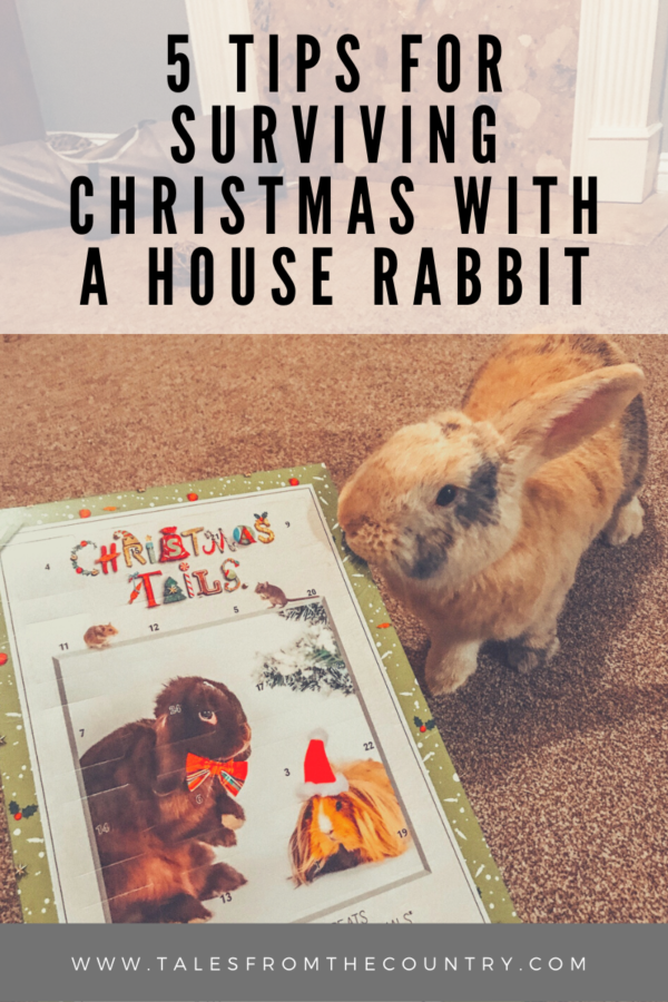 5 tips for surviving Christmas with a house rabbit