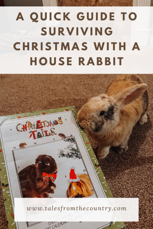 A quick guide to surviving Christmas with a house rabbit