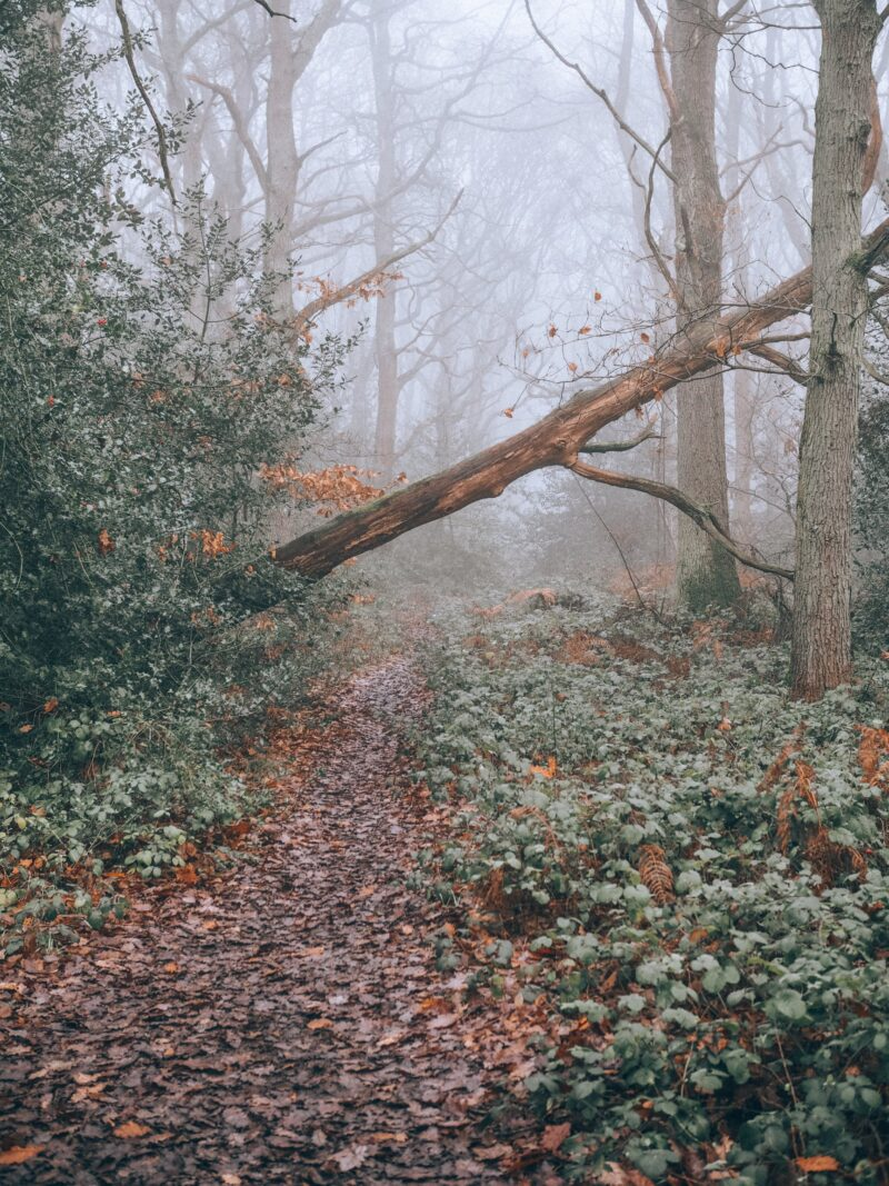 Foggy woodland walk Rushmere Country Park