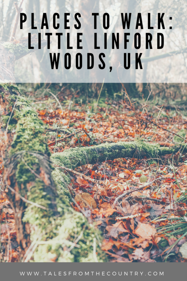 Places to walk: Little Linford Woods in the UK