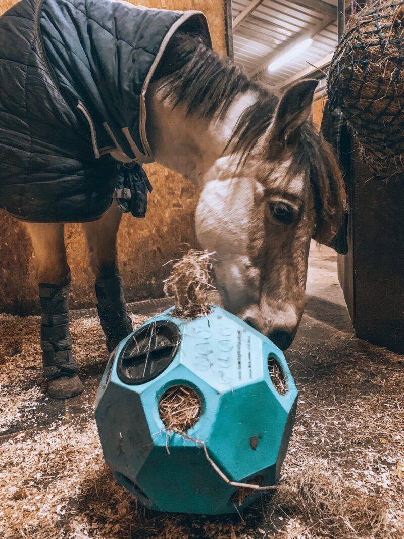 Horse using Hay Play Parallax Ball