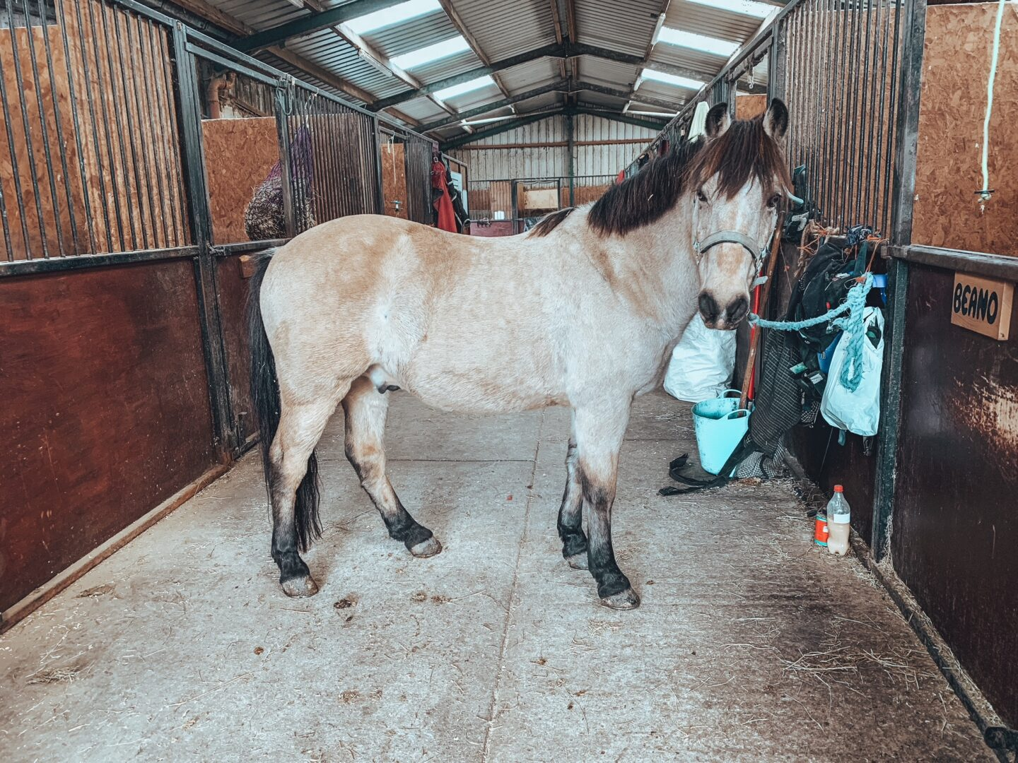 Horse stood in a stable block