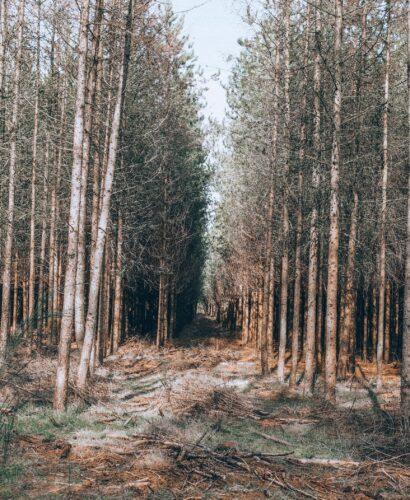 Aspley Woods has many footpaths for walkers to enjoy wandering along