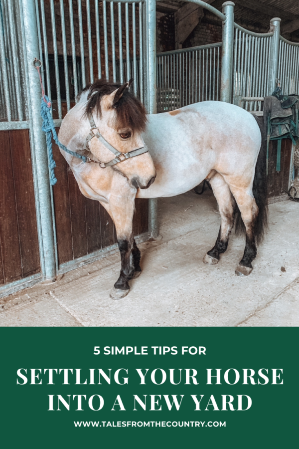 5 simple tips for settling your horse into a new yard