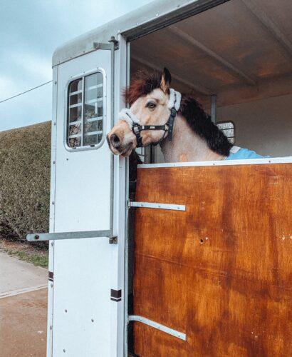 Dun pony in trailer moving yards