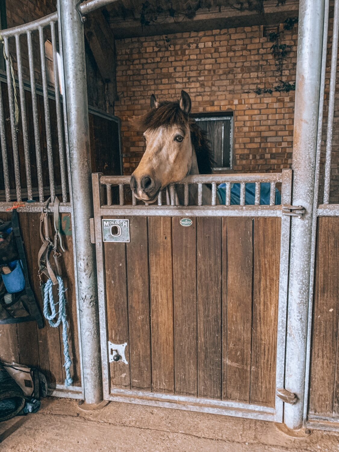 Dun pony looking over stable door